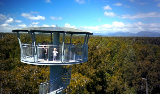 Westcoast Treetop Walk & Cafe - 3